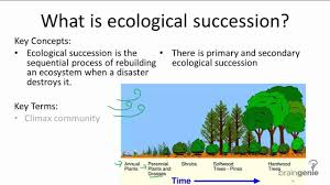 essay on the process of ecological succession words