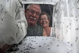 Resultado de imagem para revoada de mosquitos s. paulo