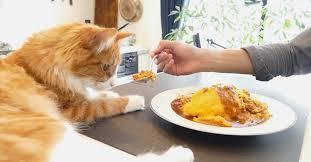 Взбитый японский омлет и рыжий котик | Пикабу