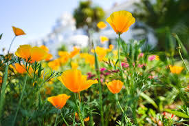 Image result for summerley plants and flowers