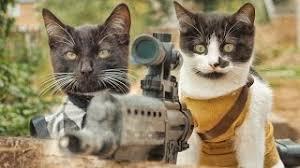 Risultati immagini per gatti armati