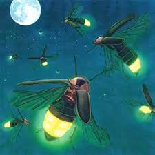 Sains : Bagaimana Kunang-kunang Dapat Bersinar?