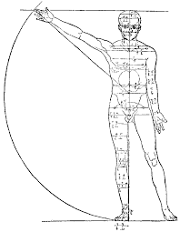 <b>Анатомия</b> человека — Википедия
