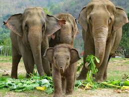 navann archives save elephant foundation online news baby elephant navann a photo essay