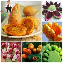 Buy cactus fruit plant and get free shipping on AliExpress.com