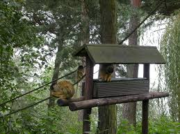 images?q=tbn:ANd9GcTaXMfEAMA8YAAV9fEbVpt7ZWU3XkW4-tTvP_XEceemoqzXlmSdAA - Do you want to live in a tree house? - Photos Unlimited