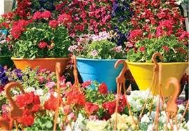 گیاهان استقبال از بهار