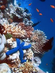 <b>Coral reef</b> - Wikipedia