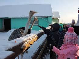 Картинки по запросу страус парк усть качка