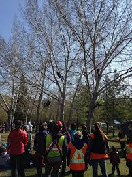 arborist job sites western edmonton projects arborcare they performed various climbing stunts in front of the children