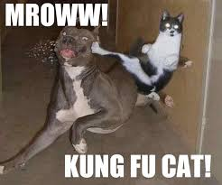 Funny pictures! Images?q=tbn:ANd9GcTapXx6RPytMfBYLFYJbLSL8BuszTW3ww2NonnVgccyrG4wsmbU