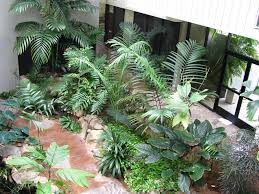 click to enlarge amazing office plants