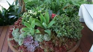 pot plants sun