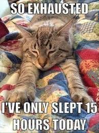 Sleepy kitty Meme | Slapcaption.com | Funny cat | Pinterest ... via Relatably.com