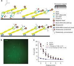 mDia1 senses both force and torque during F-actin filament ...