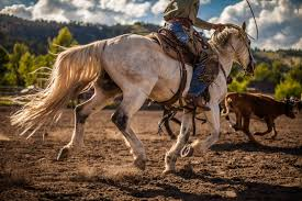 what s a ranch rodeo photo essay on a montana tradition photography by robert a cole