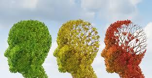 Resultado de imagen de brain ages