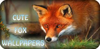 <b>Cute Fox</b> Wallpapers HD – Aplikacije na Google Play-u