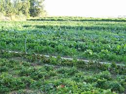short essay on agricultural productivity