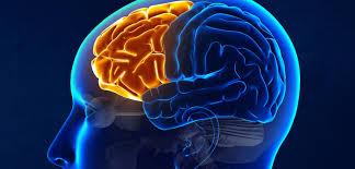 Image result for human brain