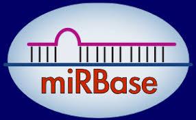Zea mays miRNAs (174 sequences) [B73_RefGen_v4]