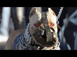THE <b>STRONGEST DOG</b> BREEDS In The World - YouTube