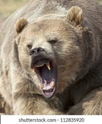 <b>Bear Mouth</b> Open High Res Stock Images | Shutterstock