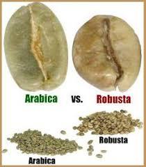 Hasil gambar untuk daun kopi arabika