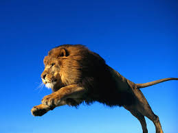 Image result for lion photos free