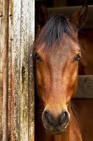 406 Best <b>Abstract Horse Art</b> images | <b>Horse art</b>, <b>Art</b>, Equine <b>art</b>