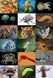 <b>Animal</b> - Wikipedia