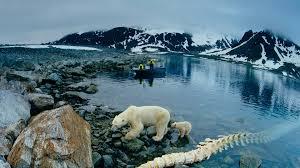 Картинки по запросу арктика экстрим