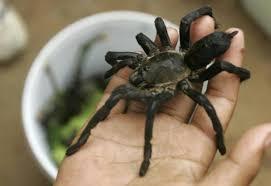 Risultati immagini per ragni