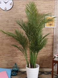 <b>Artificial Plants</b> - Artificial Arica Plant Wholesale Trader from Bengaluru