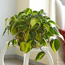 indoor plants for low light best office plant no sunlight