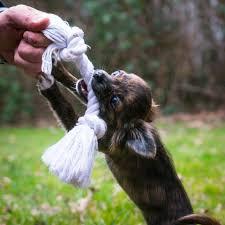 Free Images : <b>rope</b>, play, puppy, cute, wildlife, <b>dog toy</b>, <b>baby</b>, fauna ...