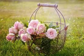 Αποτέλεσμα εικόνας για εκατόφυλλα τριαντάφυλλα
