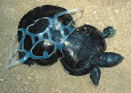 Image result for turtle saved from can wrap