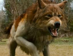 Wolf Bio- Jacob Images?q=tbn:ANd9GcTdFqbWw0P0fvFNSwhA0RBpHlPtHU0nCfU6dPtVfbq-igSBAkBRug
