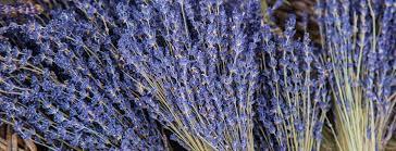 Как правильно вырастить <b>лаванду</b> из семян — советы в Журнале ...