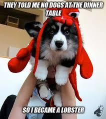Cute Memes via Relatably.com