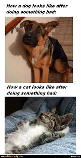 Dog Guilt vs. Cat Guilt Meme Generator - Captionator Caption ... via Relatably.com