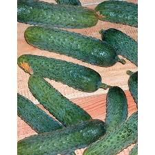 <b>Огурец Меренга F1</b> (Merenga <b>F1</b>) | Купить <b>семена огурца Меренга</b> ...