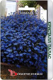 <b>Лобелия Кристалл Палас семена</b>, описание сорта, фото ...