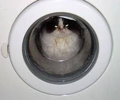 Image result for pictures of cats spinning in washing machines#