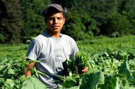 farmworkers in the united states mhp salud farm004 jpg