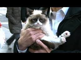 Grumpy Cat Interview 2013 on 'GMA': 'No' Meme Feline's Exclusive ... via Relatably.com