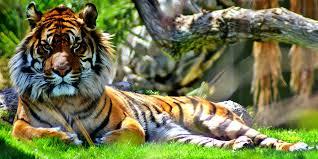 Fact Sheet - <b>Rainforest Animals</b> - <b>Rainforest</b> Action Network