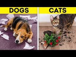 LIFE WITH DOG VS <b>LIFE WITH CAT</b>. Corgi life || Relatable facts by 5 ...