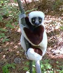 Selva de Madagascar Images?q=tbn:ANd9GcTewgzl7THwuguQXHWkvGn6f5PmTj25nF8Ctz3524UIqaA4E3qfTA